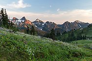 Wildflowers near Paradise at Mount Rainier National Park, Washington State, USA. Peaks of the Tatoosh Range is in the background.