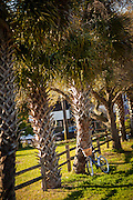 Bicycle against palm trees on the pathway to the beach on Sullivan's Island, SC.