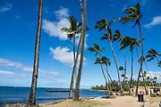 Palm trees at Haleiwa Ali'i Beach Park, island of Oahu, Hawaii, USA.