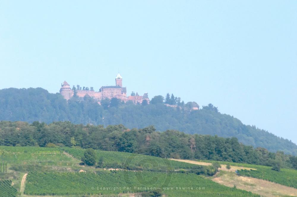 vineyard chateau du haut koenigsbourg orschwiller alsace france