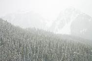 Tatoosh Range beyond Paradise Valley, Mount Rainier National Park in a snowstorm, Washington, USA