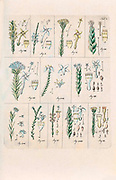 1790s drawing of 12 plants by Wendland, Johann Christoph. Printed in Hanover, Germany in 1798