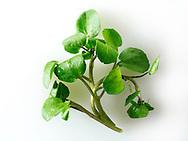 Fresh watercress leaves