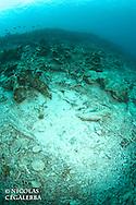 Stigmate de la pêche à la dynamite aux iles Banggais<br /> <br /> Iles Banggais, Sulawesi, Indonésie, Mission Banggai Cardinal Fish, Mai 2008, Act for Nature - Musee oceanographique de Monaco