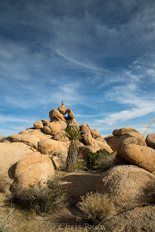 Backcountry hiker admiring the view atop a boulder in Joshua Tree National Park, California