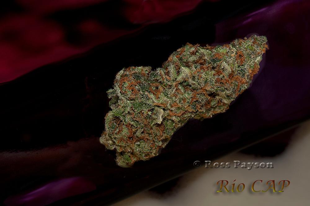 Rio Cap nug photo photographed in professional studio.
