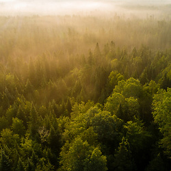 Morning fog above the forest near Moore Pond in Northwest Somerset, Maine. Boundary Mountains region. Site of proposed CMP transmission corridor.