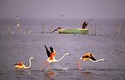 France, Provence, Flamingos in water at Grande Camargue.