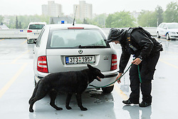 Police dog searching for a bomb at park place at Day 6 in Group B of 2015 IIHF World Championship, on May 6, 2015 in CEZ Arena, Ostrava, Czech Republic. Photo by Vid Ponikvar / Sportida