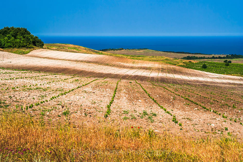 Summer fields along Black Sea coast