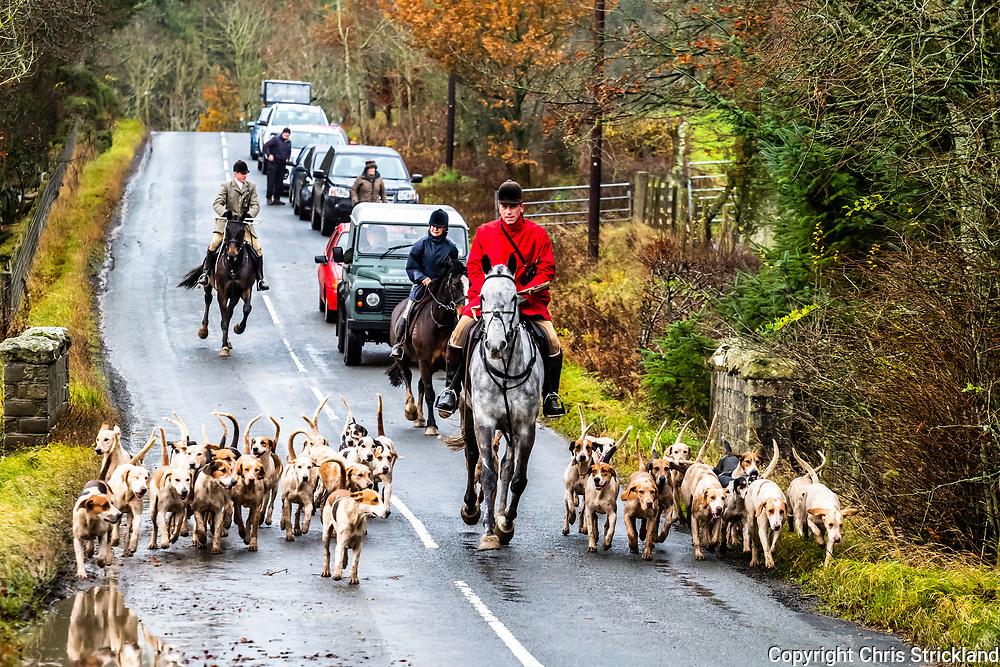 Selkirk, Scottish Borders, UK. 14th November 2018. The Duke of Buccleuch Hunt flush foxes to guns on farmland near Selkirk in the Borders.