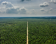 View of the jungle affected by huge Palm oil plantation in Central Kalimantan.<br /> Indonesia.