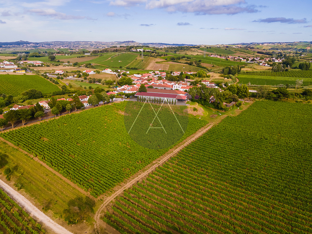 Aerial view of a vineyard with grape orchards in countryside at sunset, Ventosa, Lisbon, Portugal.