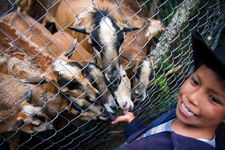 """Sheep in a pen scramble to lick the salt from the hand of a young farm boy in La Neveria, part of the Pueblos Mancomunados, a network Zapotec villages in the Sierra Norte Mountains, Oaxaca state, Mexico on July 12, 2008. The Pueblos Mancomunados, literally """"joint villages"""", welcome low-impact tourism with cabins, home stays and a large network of signposted trails and forest roads throughout the spectacular landscape which the communities share."""