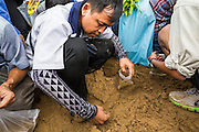 13 MAY 2013 - BANGKOK, THAILAND: A man looks for blessed rice seeds after the Royal Ploughing Ceremony in Bangkok. After the ceremony, thousands of Thais, mostly family formers, rush onto the ploughed ground to gather up the blessed rice seeds sown by the Brahmin priests. The Royal Plowing Ceremony is held Thailand to mark the traditional beginning of the rice-growing season. The date is usually in May, but is determined by court astrologers and varies year to year. During the ceremony, two sacred oxen are hitched to a wooden plough and plough a small field on Sanam Luang (across from the Grand Palace), while rice seed is sown by court Brahmins. After the ploughing, the oxen are offered plates of food, including rice, corn, green beans, sesame, fresh-cut grass, water and rice whisky. Depending on what the oxen eat, court astrologers and Brahmins make a prediction on whether the coming growing season will be bountiful or not. The ceremony is rooted in Brahman belief, and is held to ensure a good harvest. A similar ceremony is held in Cambodia.    PHOTO BY JACK KURTZ