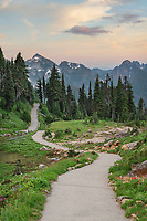 Paved section of Skyline Trail. Tatoosh Range is in the distance. Paradise wildflower meadows, Mount  Rainier National Park