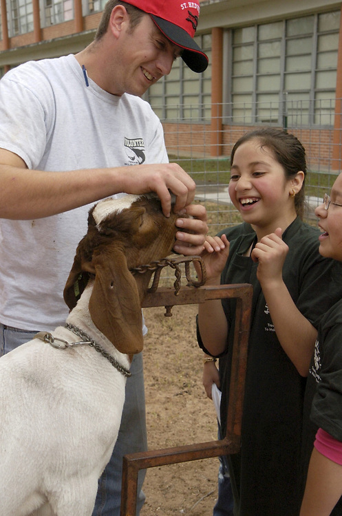Austin, TX January 10, 2005: Fifth grade Hispanic children work with their goats in preparation for a 4-H animal showing in Travis County, Texas. Many children from low-income families are getting their first experience with farm life through the program.  <br /> ©Bob Daemmrich  /