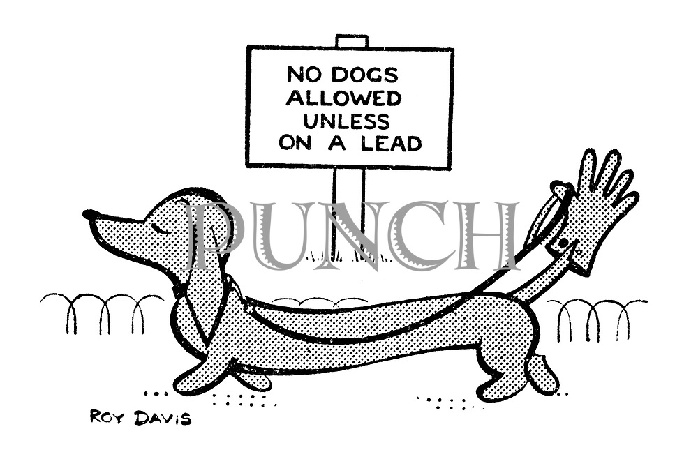 (Dachshund ties its leash to a glove on its tail to evade a mandatory lead notice)