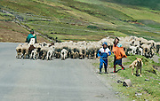 A woman, boy, girl and dog drive sheep on the road to Lago Quilotoa, in Ecuador, Andes Mountains, South America.
