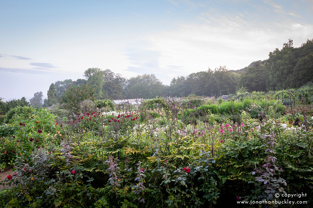 Early morning in the cutting garden at Chatsworth House