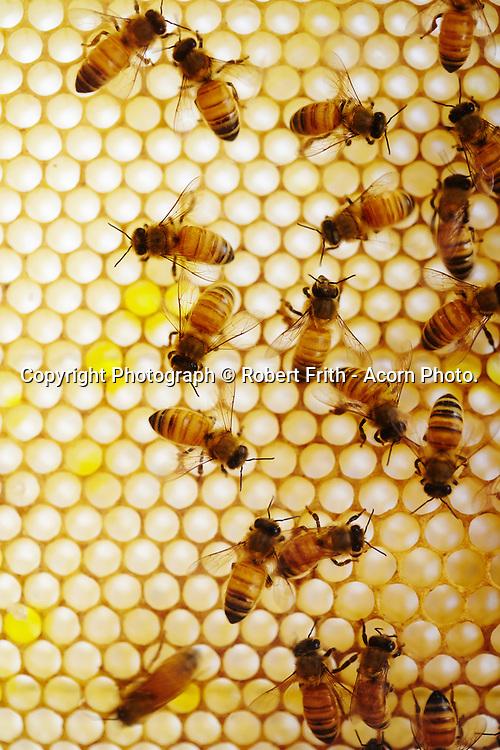 Bees at Bartholomews Meadery