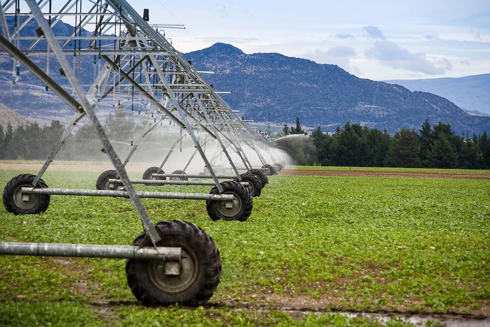 linear irrigator moves across farmland irrigating from overhead sprinklers