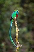 Costa Rican birds