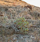 Brandberg Mountain, Damaraland, Namibia
