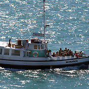 Monarch Wildlife Cruises visiting the Royal Albatross Colony at Taiaroa Head, on the tip of the Otago Peninsula, New Zealand, is the only mainland breeding colony for any albatross species found in the southern hemisphere. The first Taiaroa-reared albatross chick flew in 1938 and this now protected nature reserve has grown into an established colony with a population of around 140 birds. 26th March  2011.  Photo Tim Clayton.