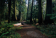 Ross Creek Cedars trail in the Cabinet Mountains in fall. Kootenai National Forest, Montana
