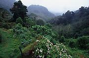 Humidity in the air in Cerro La Vieja region.