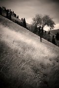 It was a dark, cold day today when I hiked along Mount Jumbo in Missoula. This was the look I envisioned when I was walking. Missoula Photographer, Missoula Photographers, Montana Pictures, Montana Photos, Photos of Montana
