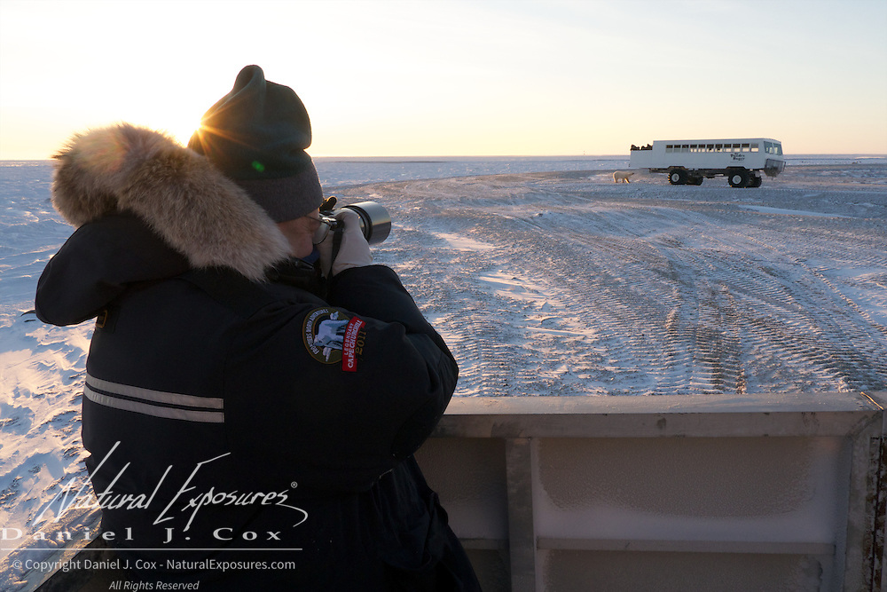 Taking photos from the back deck of a Tundra Buggy. A polar bear investigates another Tundra Buggy at Cape Churchill, Hudson Bay, Manitoba.