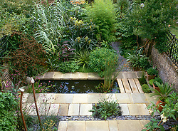 General view showing patio and canal with planting of exotic foliage in a London town garden designed by Declan Buckley. Euphorbia mellifera, Arundo donax, Astelia nervosa, Eriobotrya japonica, Canna indica purpurea and Pittosporum tobira 'Nanum'