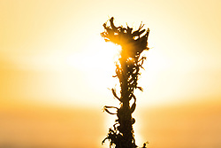 July 12, 2017 - The golden sunrise experinced at Jeffreys Bay is something everyone at the Corona Open J-Bay looks forward too even if it dawns a layday...Corona Open J-Bay, Eastern Cape, South Africa - 12 Jul 2017. (Credit Image: © Rex Shutterstock via ZUMA Press)