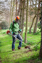 Strimming long grass around the base of trees wearing protective clothing