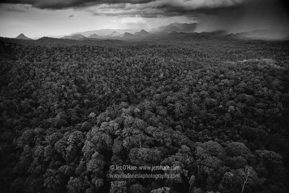 Central East Kalimantan, Indonesia.