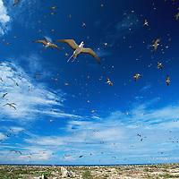 Pacific Islands Biodiversity