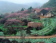 Phong cảnh Sapa