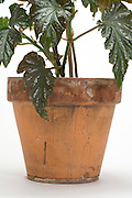pot and detail of a green plant with leaves