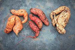 Sweet potatoes - Ipomoea batatas 'Beauregard', 'Evangeline' and 'Bonita'
