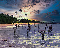Stilt Fishing, Koggala, Sri Lanka