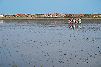 Group of school kids on guided tour of Wadden sea mudflats at low tide, Island of Juist, Germany