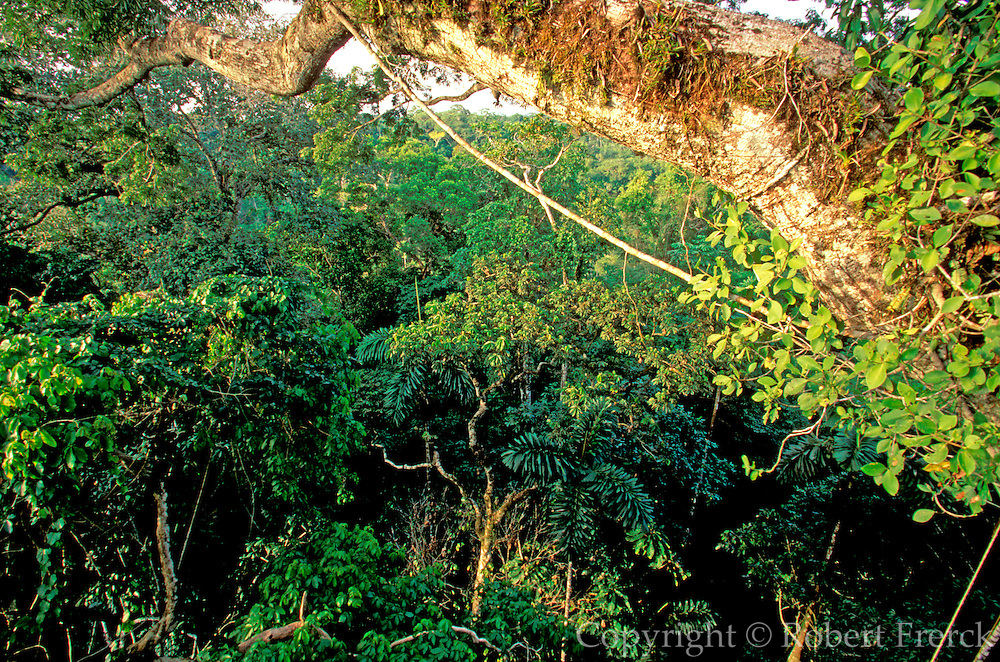 ECUADOR, AMAZON BASIN Napo River; primary rainforest canopy