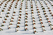 65095-03006 Wreaths on graves in winter Jefferson Barracks National Cemetery St. Louis,  MO