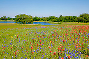 Bluebonnets and Indian Paintbrush wildflowers surround a pond in Texas