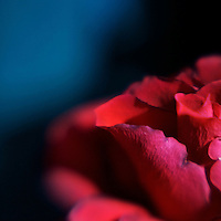 Soft focus lensbaby magic with a red rose