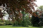 Spring trees in Highbury Park in Kings Heath, Birmingham, England, United Kingdom.
