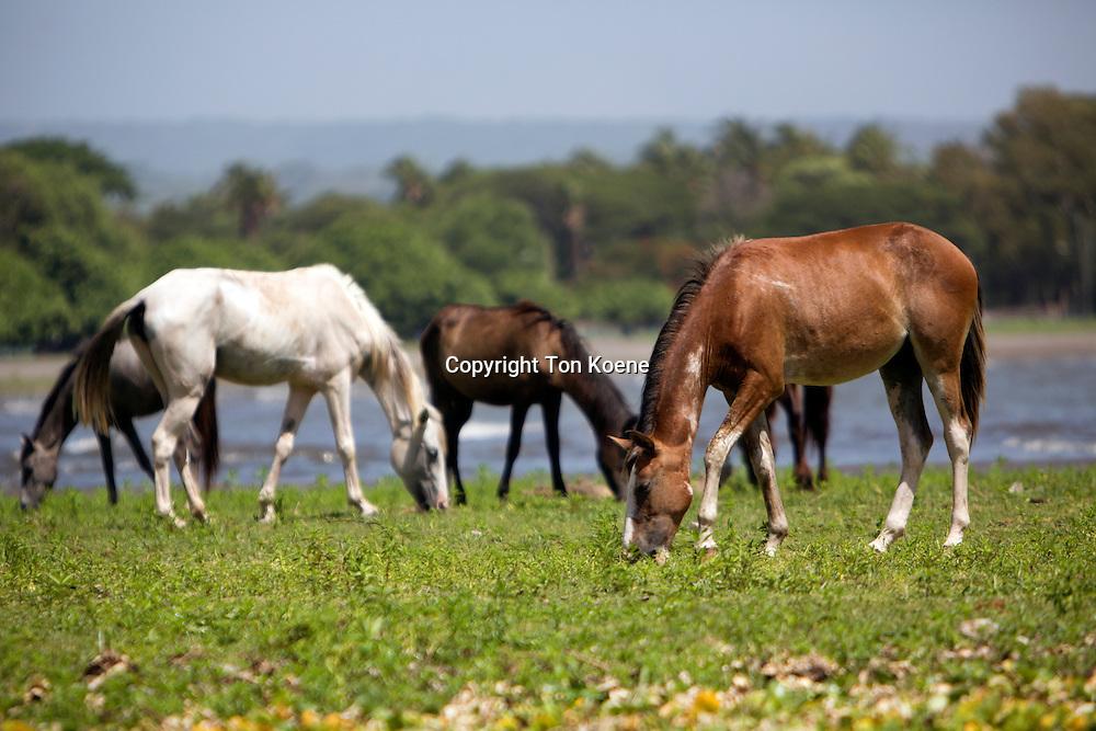 horses near lake nicaragua