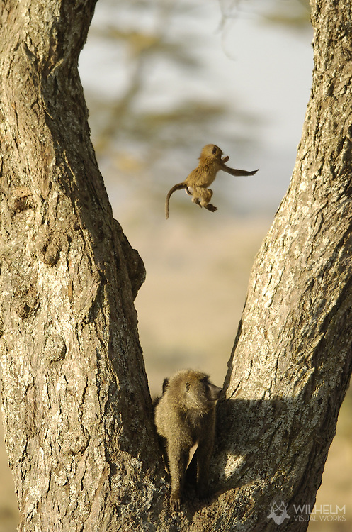 4 JAN 2006: Nature and wildlife while on safari in Serengeti National Park and Ngorongoro Crater Conservation Area in Tanzania, Africa.  ©2006 Brett Wilhelm/Brett Wilhelm Photography   www.brettwilhelm.com